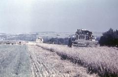 Mähdrescher E175 im Einsatz